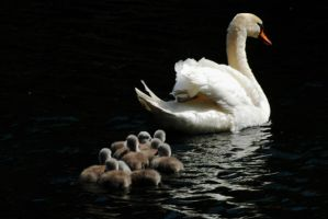 Following Mum by Earth-Hart