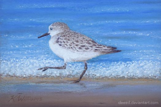Sandpiper in Pastels 3 by deeed