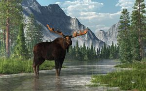 Bull Moose by deskridge