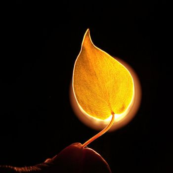 The Leaf on Fire. by etheraiel