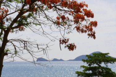 Flower tree and the sea by pueng2311