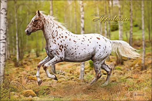 Appaloosa's by Zephyr Zodiaque Sangre by xxELUHFUNT