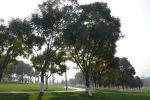 Shade of trees by nismoz