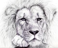 Lion BIC pen by HaitiKage