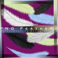 .PNG Feathers by ObscureLilium