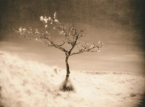 IR Tree in Lith by Mohain