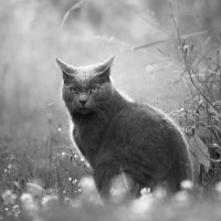 Odin the cat by oprust