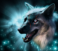 .: American Wolfdog - Blue Stars :. by WhiteSpiritWolf