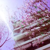 in love with spring by girlfriendinacomma