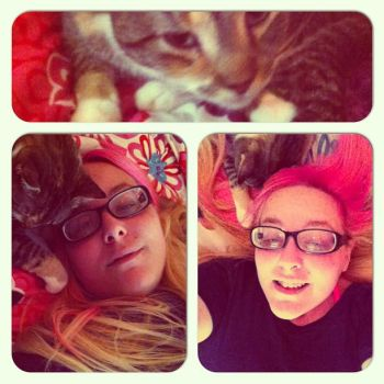 i get high with a little help from my cat by stixxy