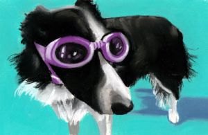 border collie in goggles by classina