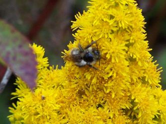 Busy Bee by TheNewSun