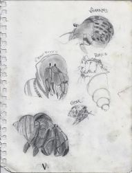 Hermit Crabs by came11e