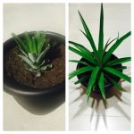 Growing a Pineapple by Heidi