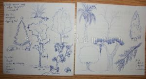 Tree Sketches by AmaranthineRain