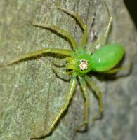Magnolia Green Jumper, female by duggiehoo