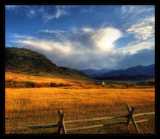 Field of Gold by FasterThanChris