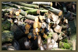 Woodstack by Sharandra