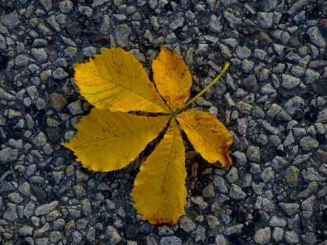 Leaves Get Lonely Too by Undefined-Mari