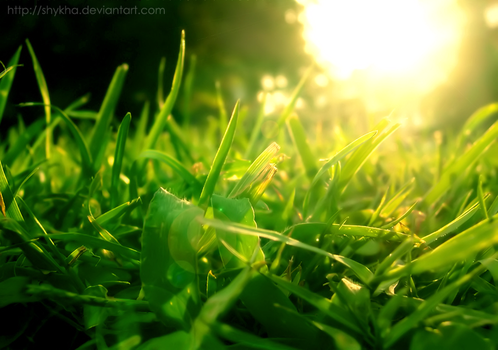 Beside the green, green grass by Shykha