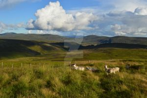 Highlands by Frollino