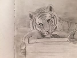 Tiger by kimloveart