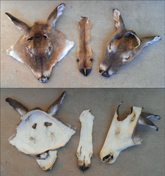 deer bits by flayote