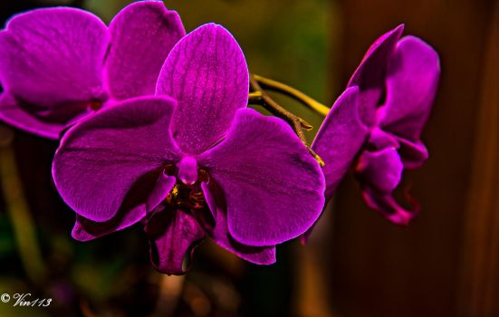 Orchid 2 by vin113