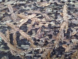 Wood and leaf texture - stock by Somnovore