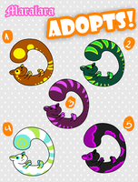 Adoptables Ferrets -Taken- by Maralara