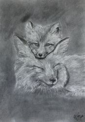 Fox family charcoal drawing by Actlikenaturedoes