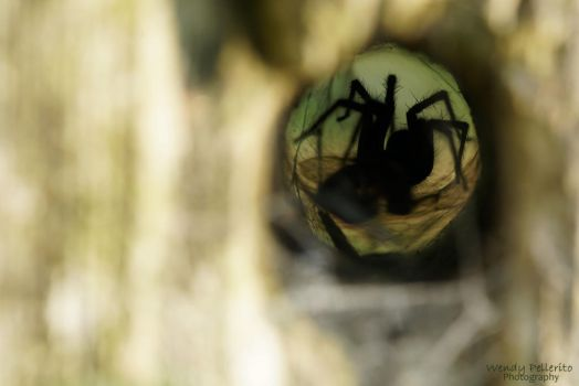 Peering through a Hole in the Wooden Post by wendy-pellerito