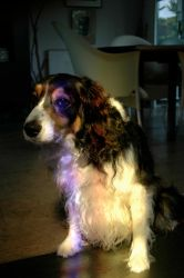 Dog in Light 2 by BBrett