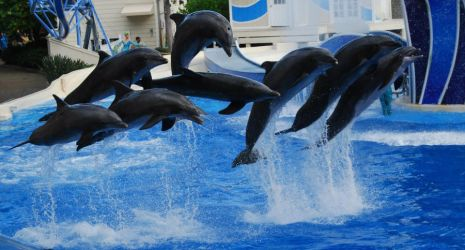SeaWorld - All Together Now 2.0 by kngdmhrts2