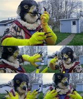 Perigrine falcon partial by Crystumes