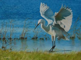 Little Egret at Elmley by huckerback6