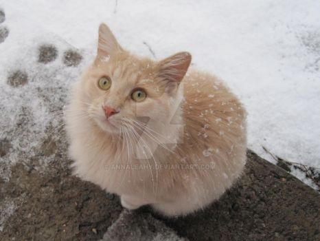 Abominable Snow Cat