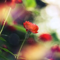 Colorful.. by addy-ack