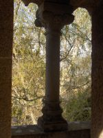 Places - windows to the forest by Stock-gallery
