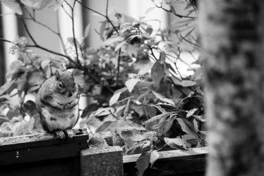 Pensive Squirrel by FinalTouch
