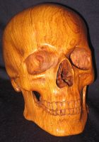 Carved Cocobolo Skull by WaterwalkerWoodworks