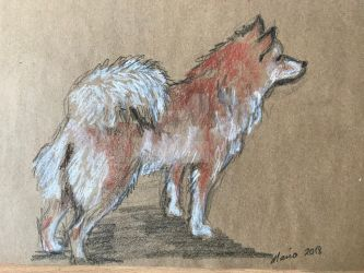 Doni,2018,chalk oilpastel pencil by Maria-the-artist