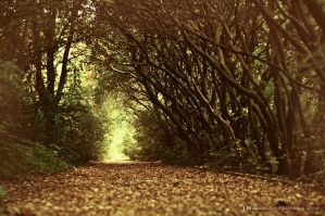Autumn is coming by luxuss
