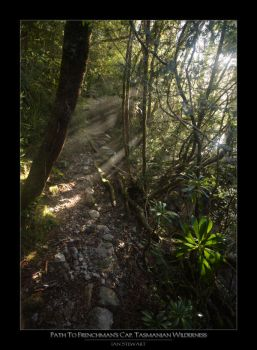 Rainforest Path by eehan