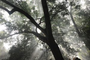 Haunted Volumetric Environment - The Tree by childlogiclabs