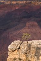 The Tree Stands Alone by ryangallagherart