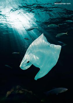 NO to Plastic Bags by talikf