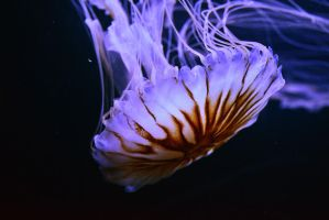 jelly by SemioticPhotography