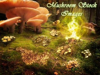 30 Mushroom Stock Images by XResch