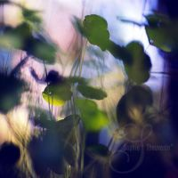 the moving light by prismes